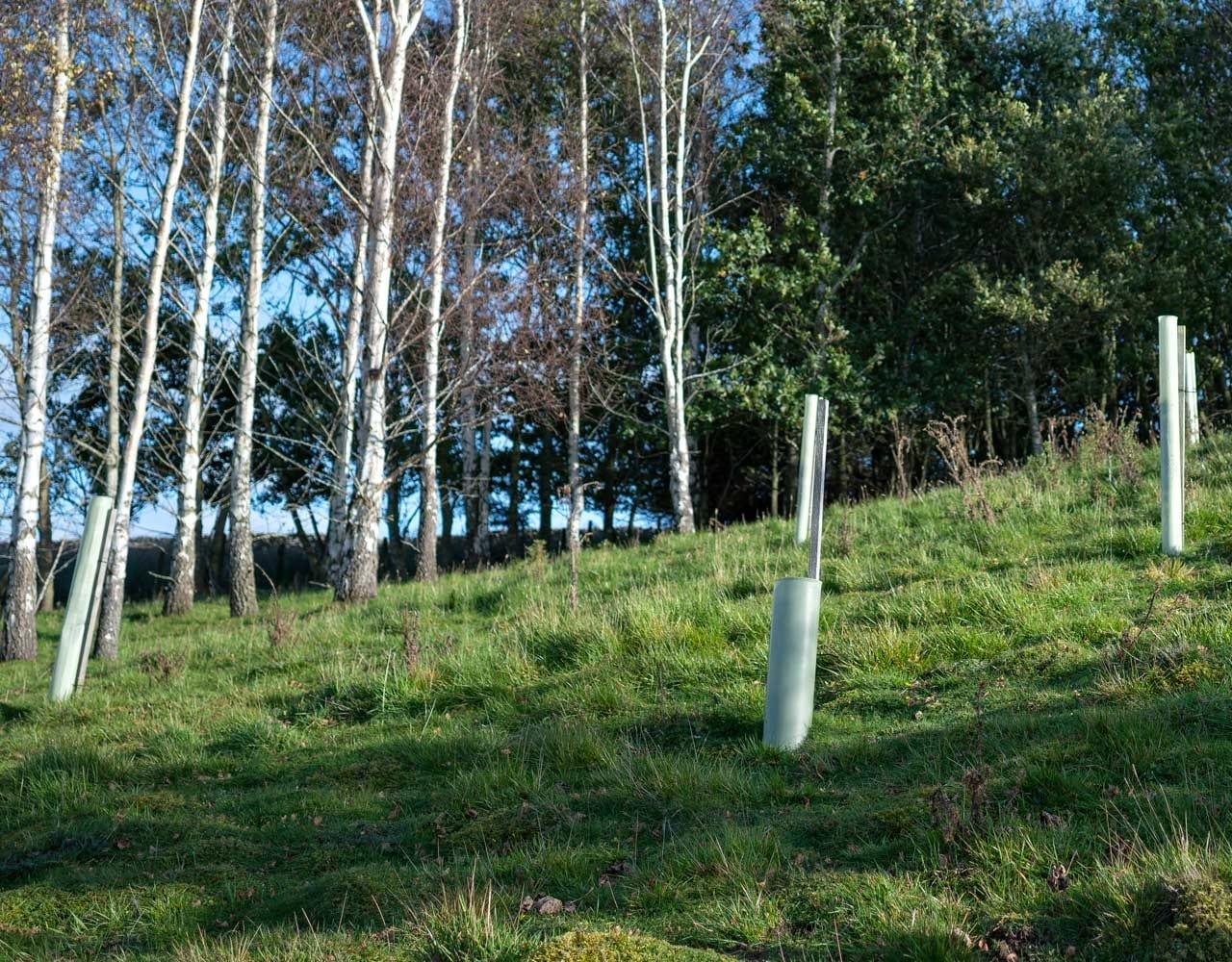 GSC Grays - Taking Advantage Of Woodland Planting Schemes