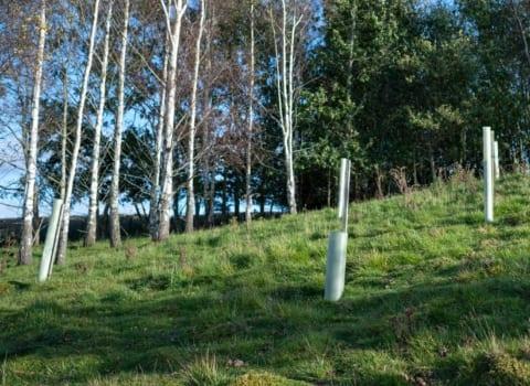 TAKING ADVANTAGE OF WOODLAND PLANTING SCHEMES